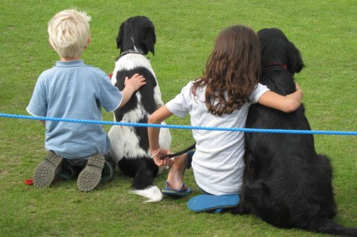 Fun Dog Show at Wisborough Green Fete