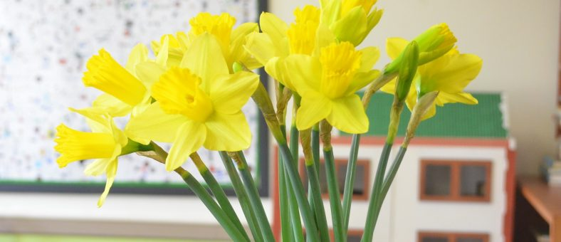 Daffodils at Billy's